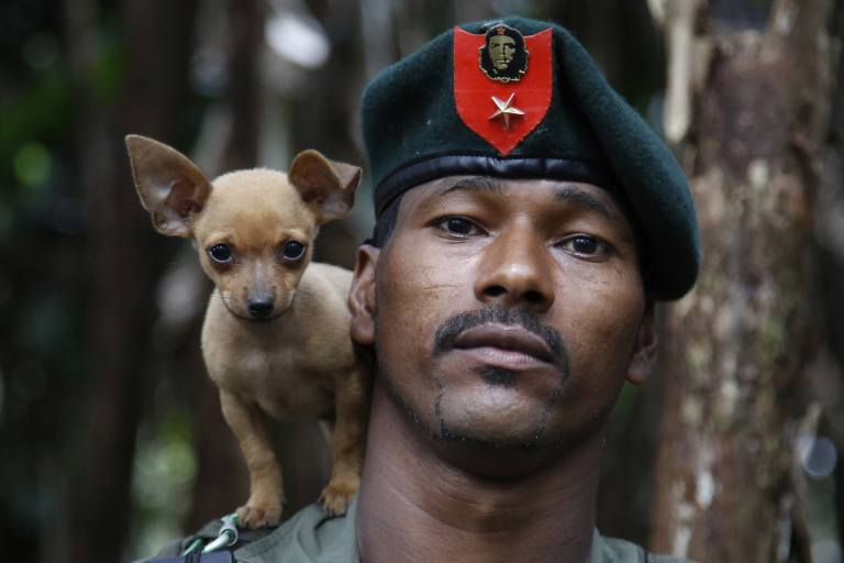 CORRECTS DATE PHOTO TAKEN - In this Aug. 13, 2016 photo, a rebel soldier of the 48th Front of the Revolutionary Armed Forces of Colombia, or FARC, poses for a photo with his dog in the southern jungles of Putumayo, Colombia. As the country's half-century conflict winds down, with the signing of a peace deal with the Government perhaps just days away, thousands of FARC rebels are emerging from their hideouts and preparing for a life without arms. (AP Photo/Fernando Vergara)