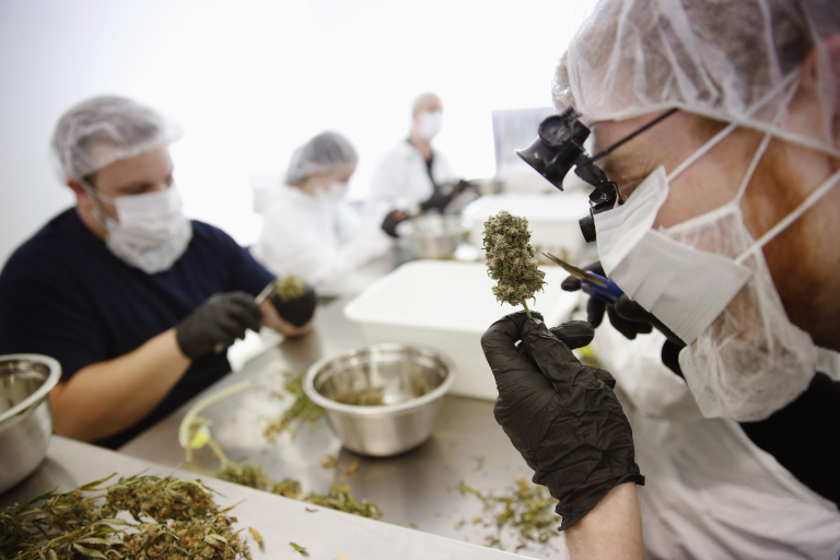 Director of Quality Assurance Thomas Shipley prunes dry marijuana buds before they are processed for shipping at Tweed Marijuana Inc  in Smith's Falls, Ontario, April 22, 2014.   REUTERS/Blair Gable/File Photo - RTSU7W7