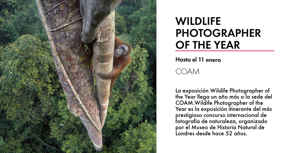 Wildlife-Photographer-of-the-Year-COAM